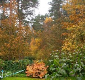 herbst-autumn
