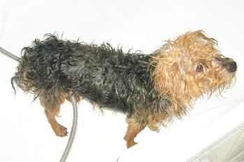 Dreckhund